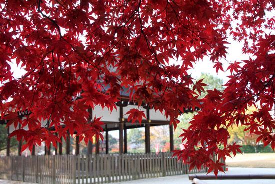 紅葉だより32 上賀茂神社_e0048413_1802989.jpg