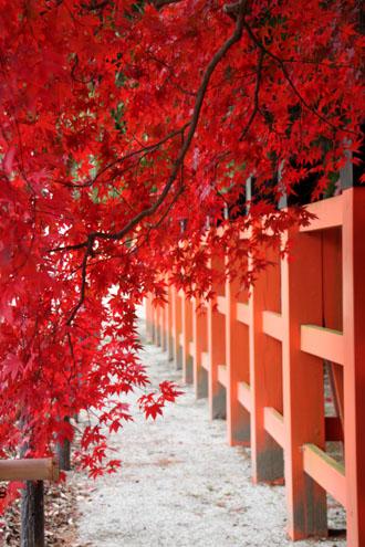 紅葉だより32 上賀茂神社_e0048413_1804532.jpg