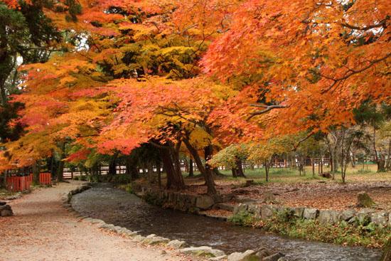 紅葉だより32 上賀茂神社_e0048413_1811383.jpg