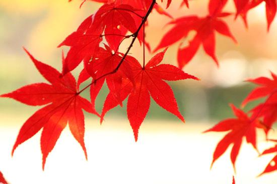 紅葉だより32 上賀茂神社_e0048413_181198.jpg