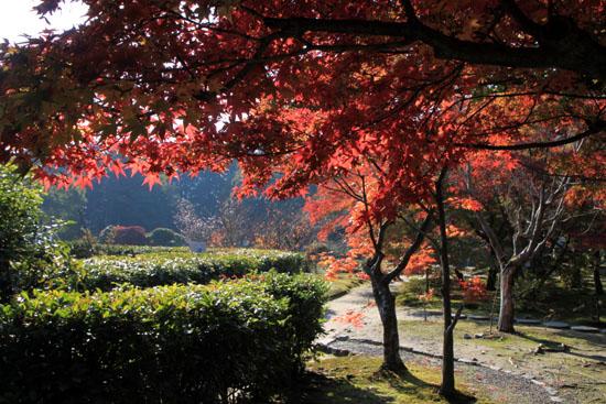 紅葉だより34 勧修寺(かじゅうじ)_e0048413_1911873.jpg