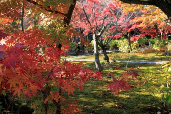 紅葉だより34 勧修寺(かじゅうじ)_e0048413_1913170.jpg