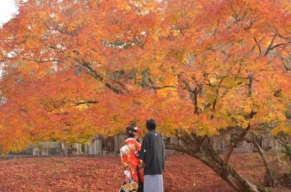 吉野神宮で結婚式_e0046950_17491612.jpg