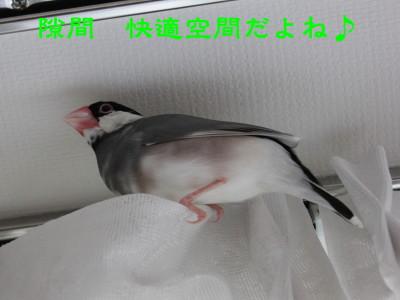 b0158061_20111411.jpg