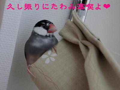 b0158061_2011348.jpg