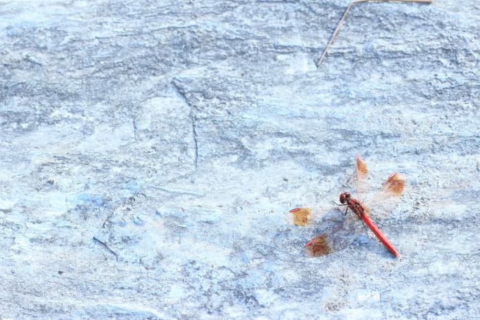 ■■ うつろひゆく季節を感じて ~The Art of Nature 2012  ~3~ ■■_c0195662_22491757.jpg