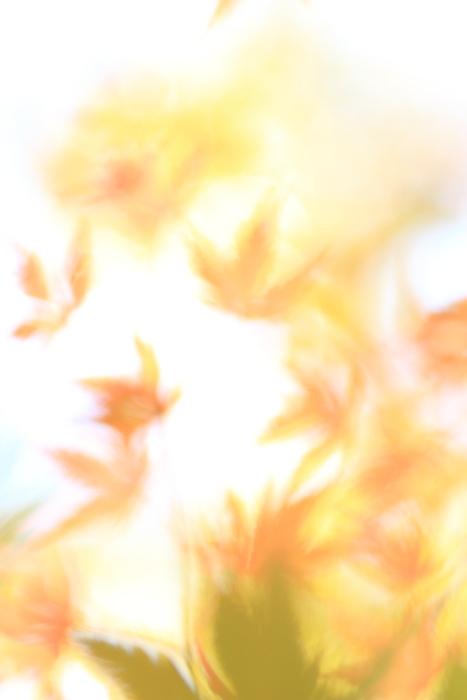 ■■ うつろひゆく季節を感じて ~The Art of Nature 2012  ~3~ ■■_c0195662_2341067.jpg
