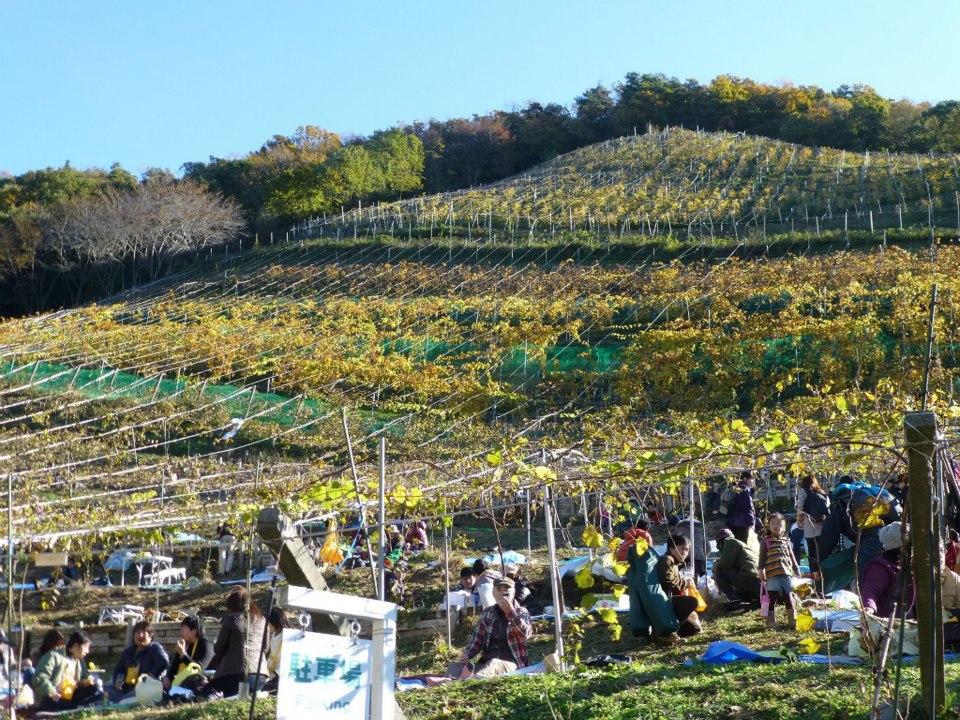 オトナの遠足 ココファーム収穫祭2012_c0100865_6215144.jpg