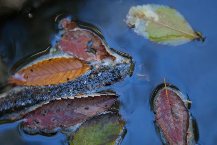 落葉の川。_b0022268_21222640.jpg