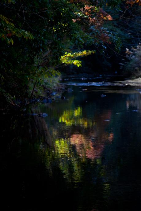 落葉の川。_b0022268_2123785.jpg