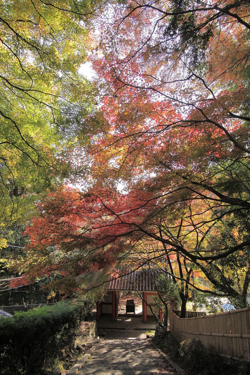 紅葉 2012  西山  金蔵寺_f0021869_23333572.jpg