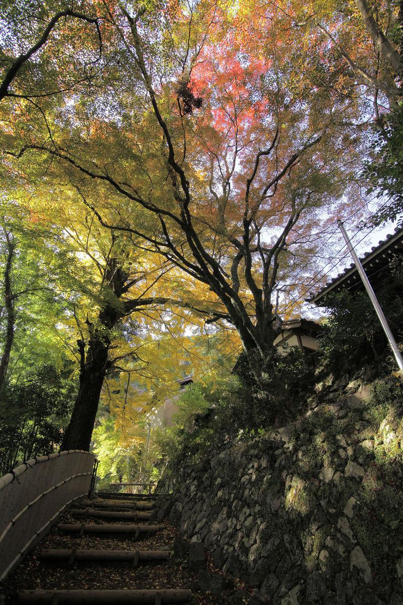 紅葉 2012  西山  金蔵寺_f0021869_23345720.jpg