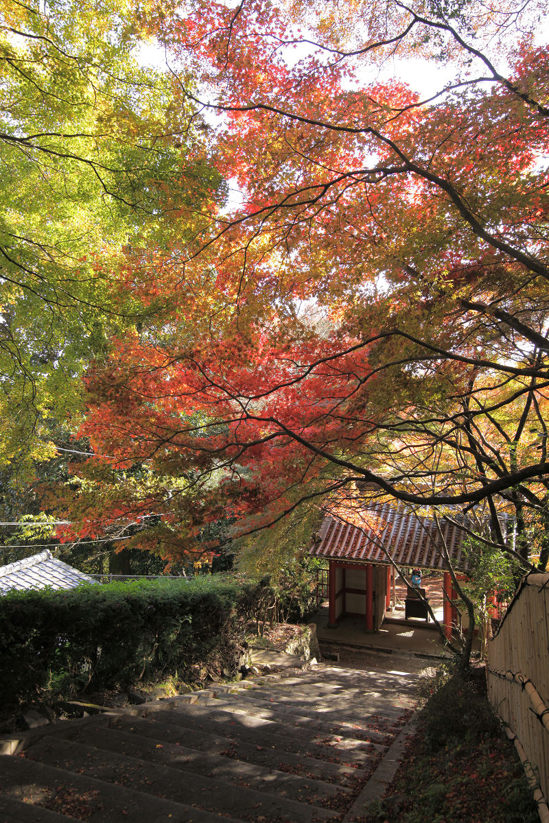 紅葉 2012  西山  金蔵寺_f0021869_23353083.jpg