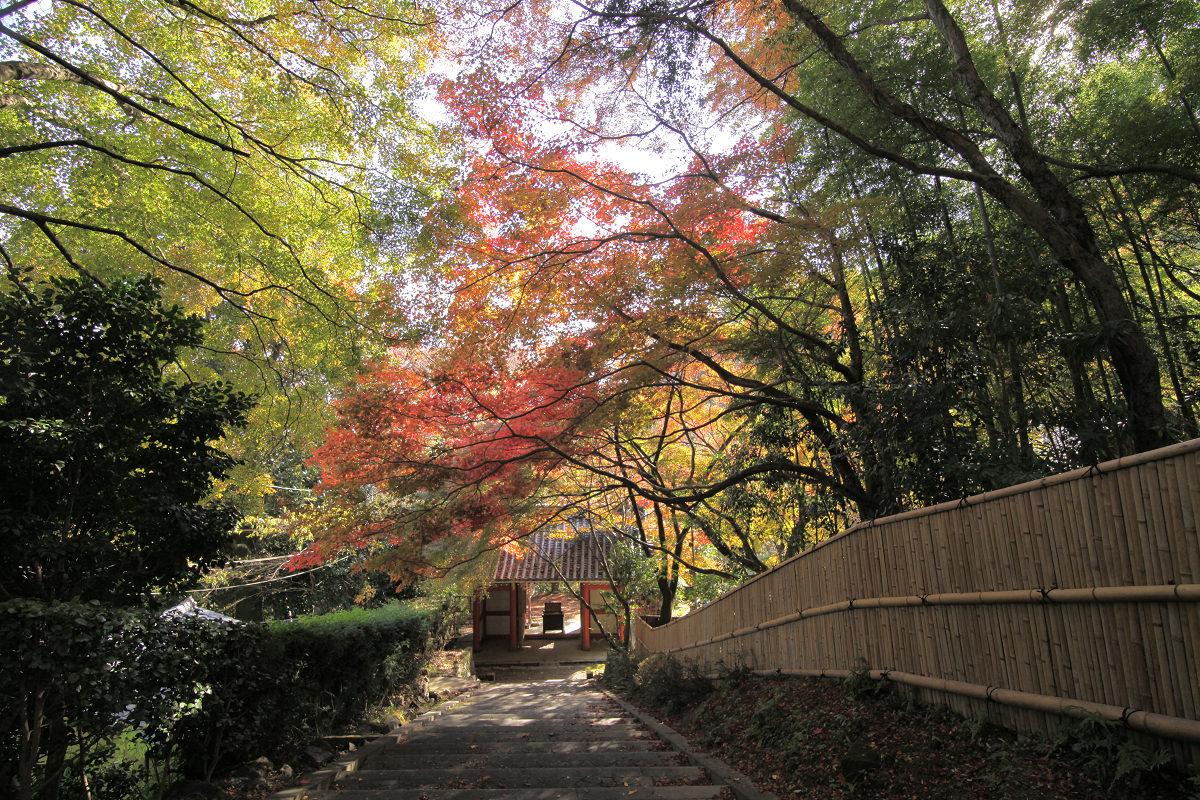 紅葉 2012  西山  金蔵寺_f0021869_23375236.jpg