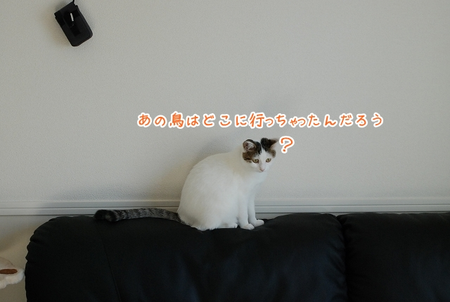 a0266372_23284132.jpg