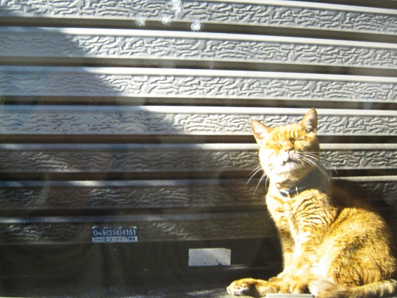 たまごの工房企画 「高円寺裏通り猫展」 その7_e0134502_19253118.jpg