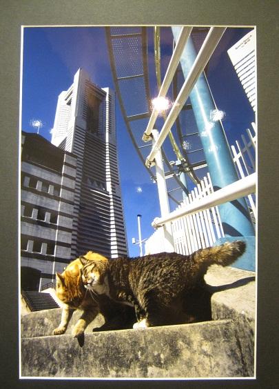 たまごの工房企画 「高円寺裏通り猫展」 その7_e0134502_19301940.jpg