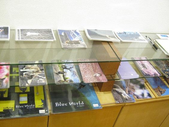 たまごの工房企画 「高円寺裏通り猫展」 その7_e0134502_1933116.jpg