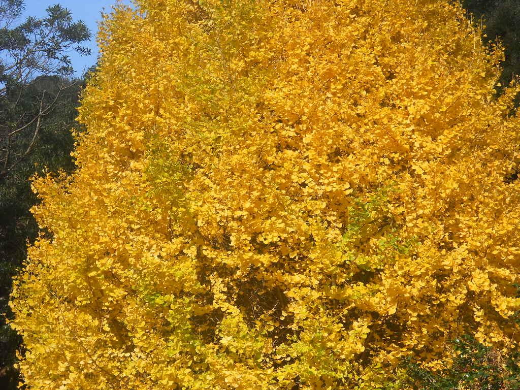 ぎんぎいろ銀黄色~(陶人形舎土の羊窯 山口ユキヒロさんを偲んで・・)_f0146802_8372993.jpg