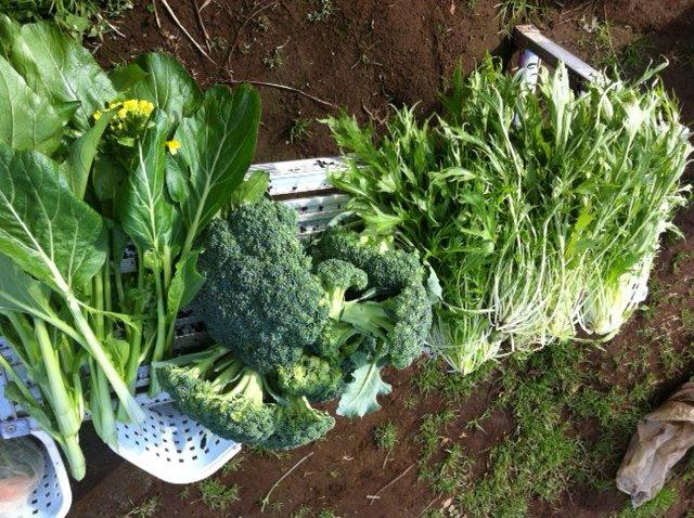 今朝は沢山収穫・・・_c0222448_1431650.jpg