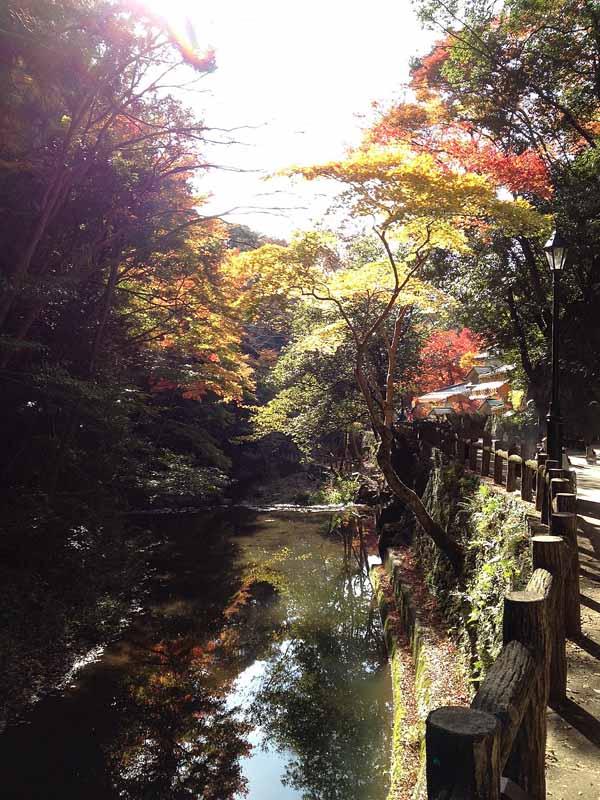 日本春蘭「紫天龍」                  No.1219_d0103457_3104950.jpg