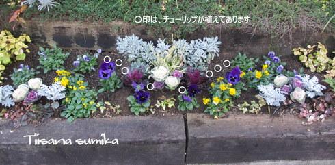 花壇にキラキラ葉牡丹お仲間入りで華やかに~☆彡_a0243064_12465854.jpg