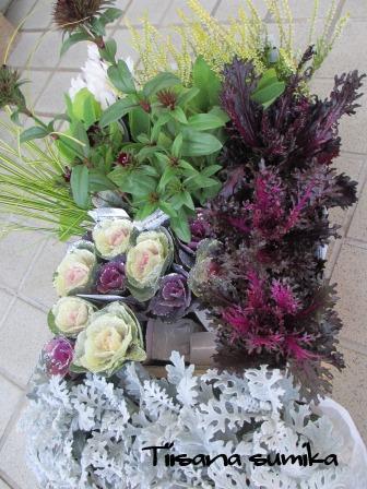 花壇にキラキラ葉牡丹お仲間入りで華やかに~☆彡_a0243064_12511774.jpg