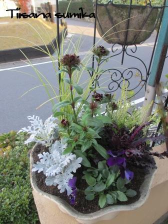 花壇にキラキラ葉牡丹お仲間入りで華やかに~☆彡_a0243064_1252542.jpg