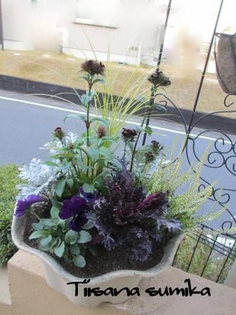 花壇にキラキラ葉牡丹お仲間入りで華やかに~☆彡_a0243064_1252573.jpg