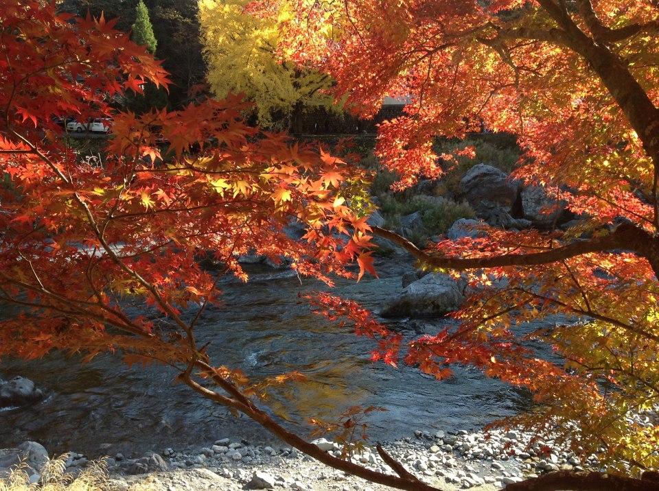 秋深まる中...._b0131865_2355984.jpg