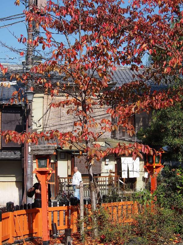 祇園 白川_c0180971_2216130.jpg