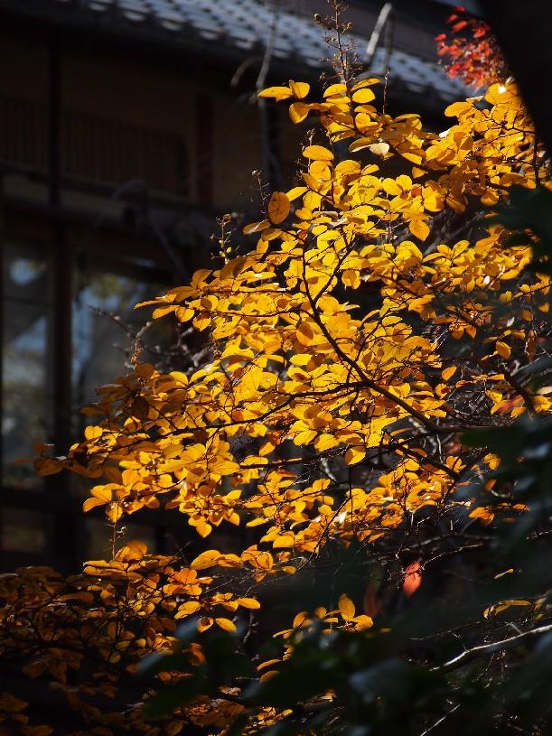 祇園 白川_c0180971_22163594.jpg
