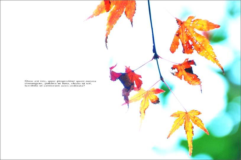 f0198771_024485.jpg