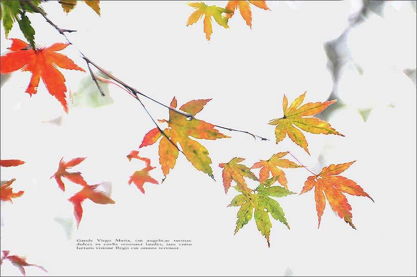 f0198771_02578.jpg