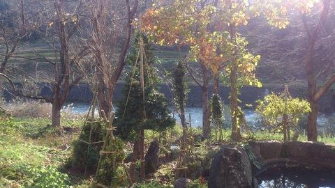 新柳の冬囲い完了。_d0182179_1661131.jpg