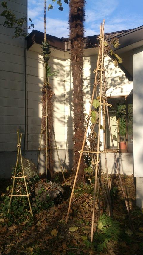 新柳の冬囲い完了。_d0182179_21333652.jpg