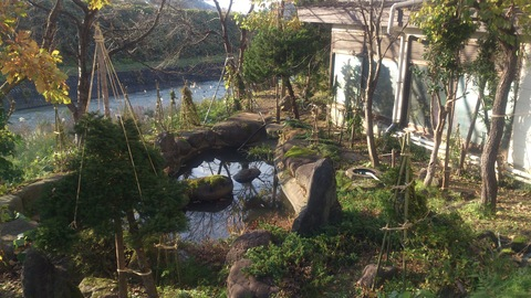 新柳の冬囲い完了。_d0182179_21555025.jpg