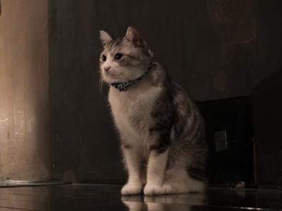 猫プラス_a0180681_20515510.jpg