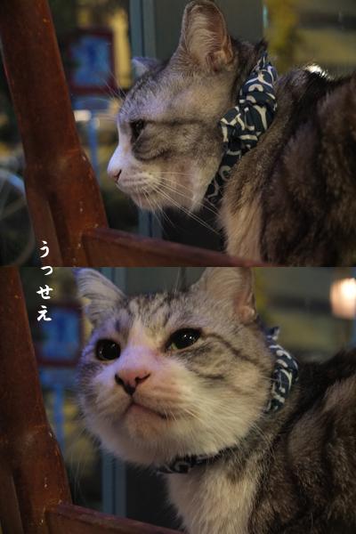 猫プラス_a0180681_22424313.jpg