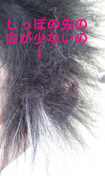 c0149495_198899.jpg