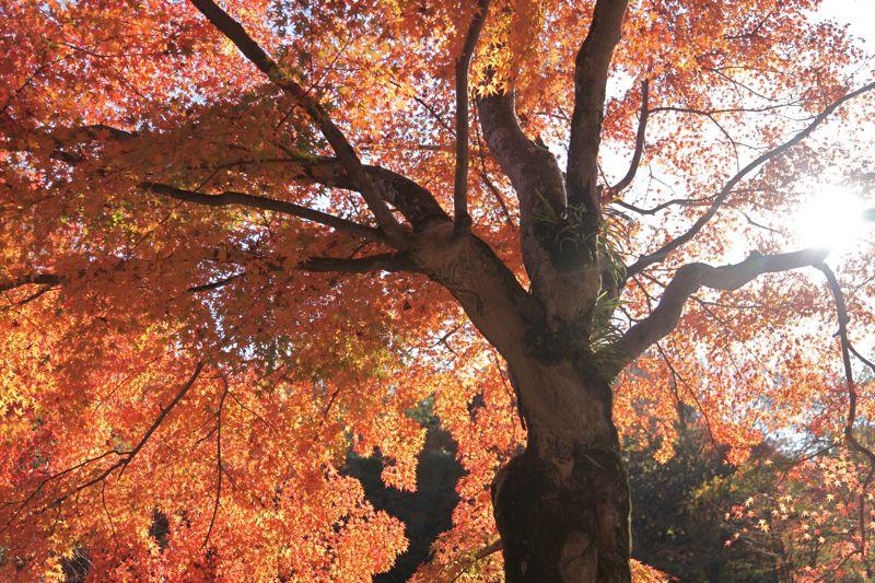 高尾山の紅葉、最高に綺麗でした。_d0148902_21421745.jpg
