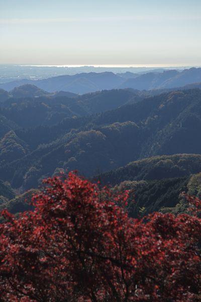 高尾山の紅葉、最高に綺麗でした。_d0148902_21432345.jpg