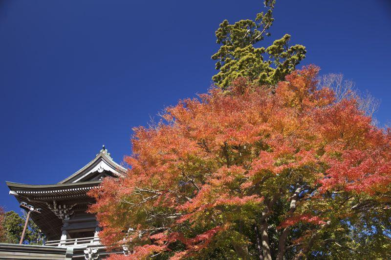 高尾山の紅葉、最高に綺麗でした。_d0148902_21452522.jpg