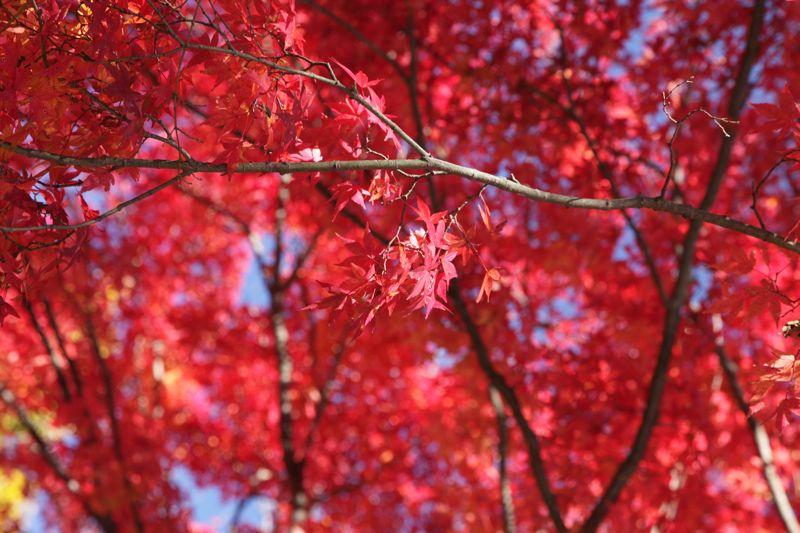高尾山の紅葉、最高に綺麗でした。_d0148902_2146315.jpg
