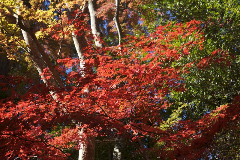 高尾山の紅葉、最高に綺麗でした。_d0148902_2146365.jpg