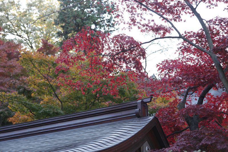 高尾山の紅葉、最高に綺麗でした。_d0148902_2154925.jpg