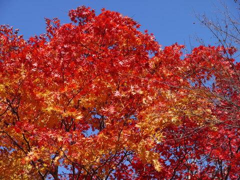 鹿沼 古峰園へ紅葉狩り。_b0116313_23294063.jpg