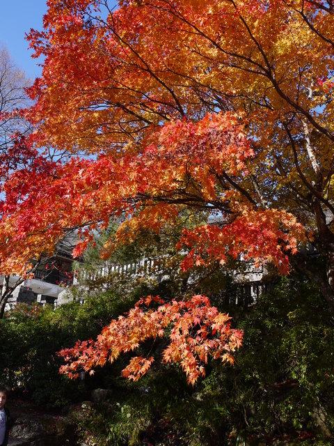 鹿沼 古峰園へ紅葉狩り。_b0116313_23302647.jpg