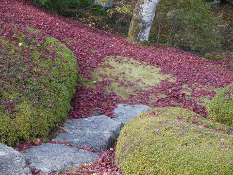 鹿沼 古峰園へ紅葉狩り。_b0116313_23371619.jpg