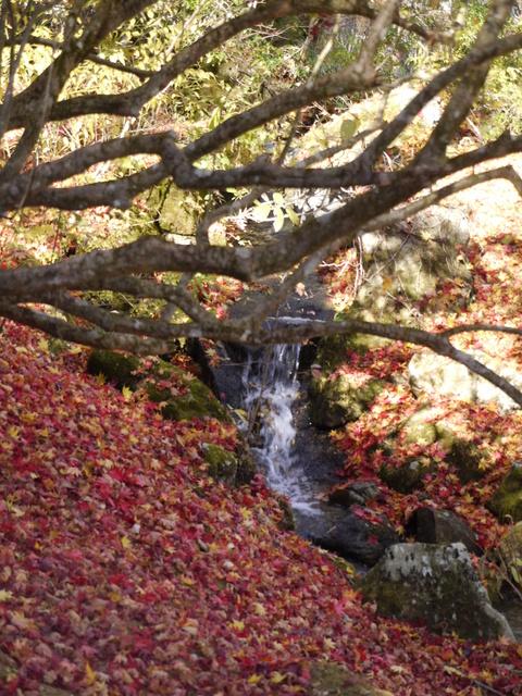鹿沼 古峰園へ紅葉狩り。_b0116313_2338011.jpg